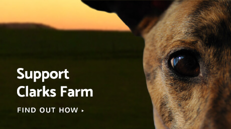 Support Clarks Farm